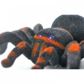 Spider tarantula with the remote control