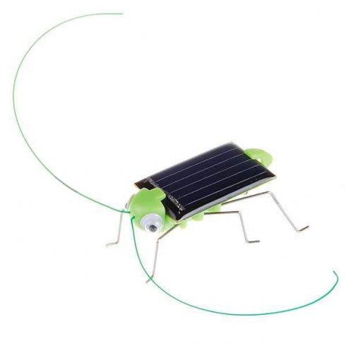 Beetle Solar