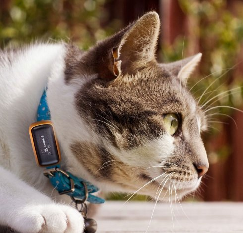 G-Paws sledovač - Pet GPS Tracker