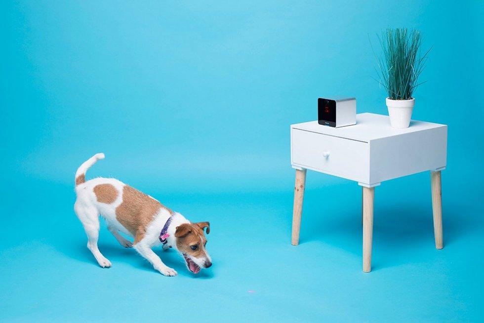 petcube interaktive kamera mit spielzeug laser f r tiere cool mania. Black Bedroom Furniture Sets. Home Design Ideas
